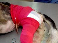 Pinta after surgery