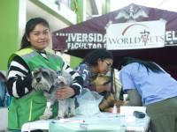WORLDVETS CUSCO - PERU025