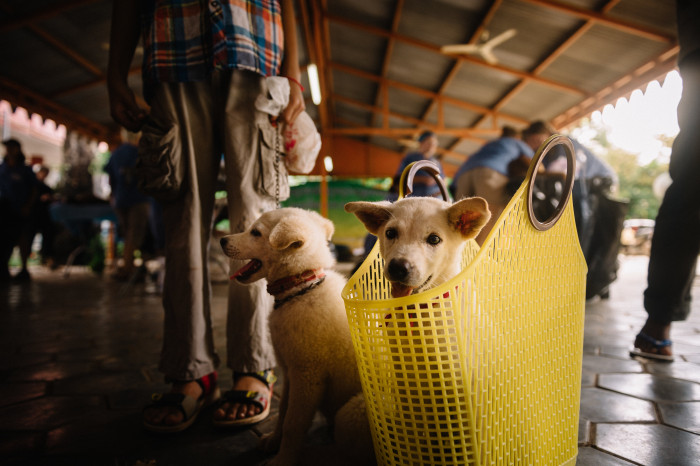 World Vets to Increase Veterinary Assistance for Small Animals in Asia